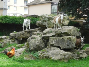 Chartres: parc: goats, chickens